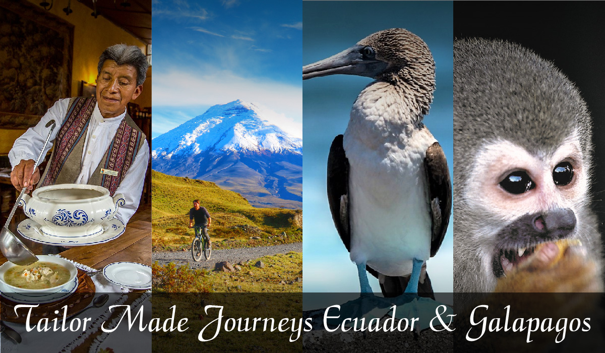 Tailor made trips in Ecuador and Galapagos – Let's organize together a very special trip for you