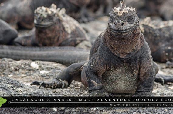 Culturas Ecuador – Galápagos  & Andes – Multiadventure journey  en Ecuador