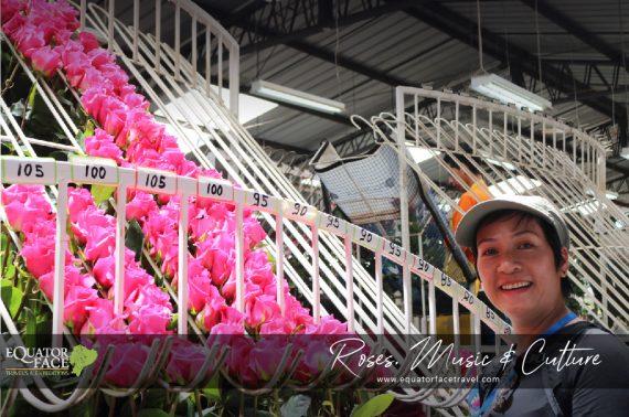Ecuador Roses, Music & Culture Otavalo Ecuador
