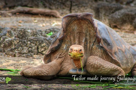 Tailor made journey Galapagos, hotels & yacht