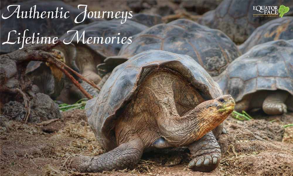 Galapagos Sea Man Journey – Equator Face Travel