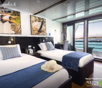 natural paradise jr suite