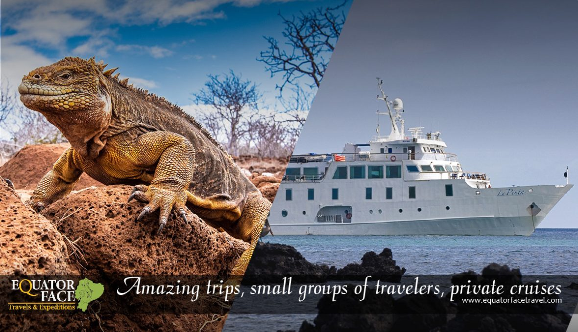Activities for vacations in Galapagos, Isabela Yacht